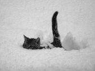 meow-meow-m