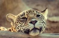 meow-meow-o