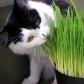 cat-grass1