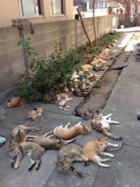 Cats Laying Down
